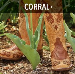 ladies bootdaddy collection with corral